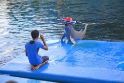 Loma Dolphin Show